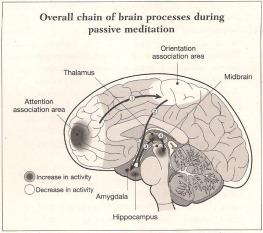 Neuro_brain_in_meditation