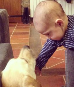 gos i nadó