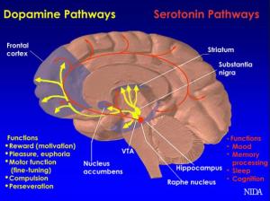 Circuit de recompensa dopamina